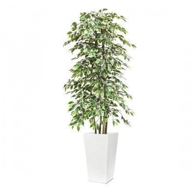Artificial Ficus tree Rental